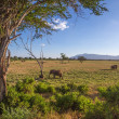 Savana landscape in Africa. Tsavo West, Kenya. — Stock Photo