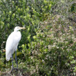 Egret — Stock Photo #13205690