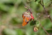 En fjäril — Stockfoto