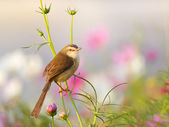 Bird on flower in the garden — Stock Photo