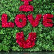 Stock Photo: Word of love made from red rose petals on green leaf