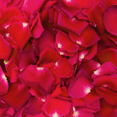 Beautiful red rose petals for background — 图库照片