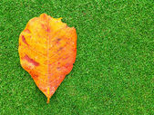 Dead leaf on green grass — Stock Photo
