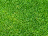 Green grass texture from golf course for background — Stock Photo