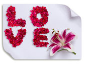 Love word made from red rose petals and lily flower on paper — Stock Photo