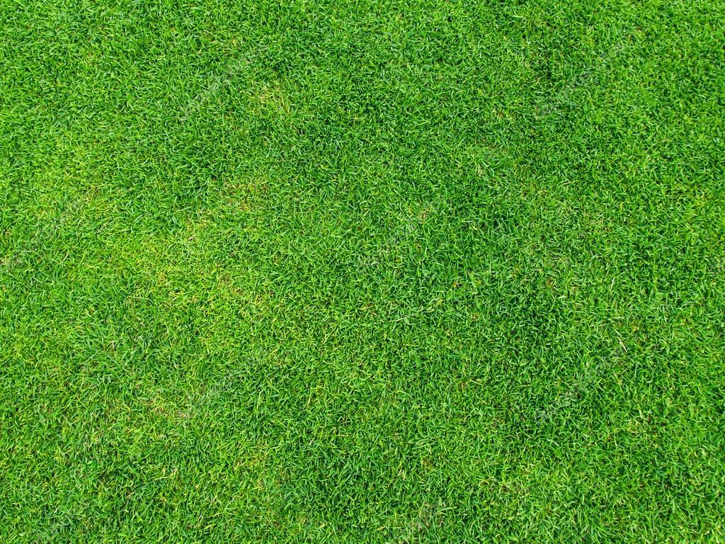 grüne Gras Textur vom Golfplatz für Hintergrund ...