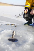 Ice Fishing — Foto Stock