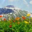 Poppies in front of a mountain  — Stock Photo
