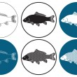 Stock Vector: The figure shows the carp fish