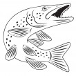 Pike fish — Stock Vector