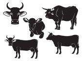 The figure shows a cow, bull and calf — Stock Vector