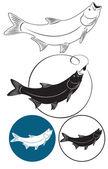Chub fish — Stock Vector