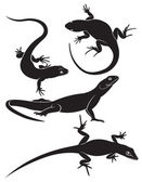 Lizard — Stock Vector