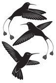 Colibri — Stock Vector