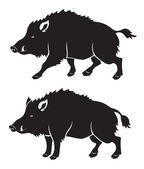 Wild boar — Stock Vector