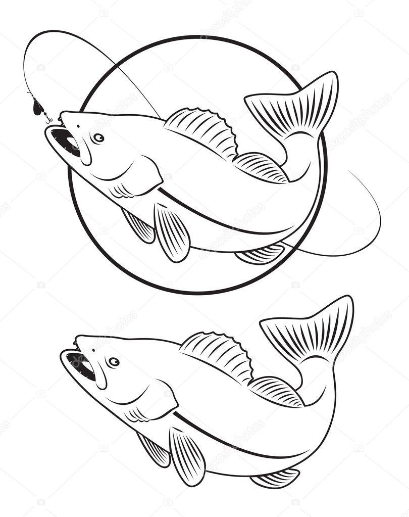 Walleye Fish Coloring Page Sketch