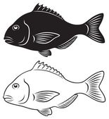 The figure shows seabass — Stock Vector