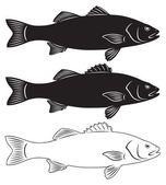 Seabass fish — Stock Vector