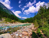 In the mountain river — Stock Photo