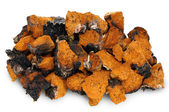 Chaga - birch mushroom — Stock Photo