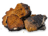 Chaga (Inonotus obliquus) - medicinal birch fungus — Stock Photo