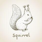 écureuil — Vecteur