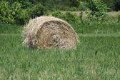 Hay Bales (Round) — Stock Photo