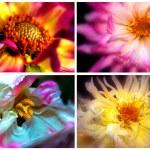 Four Flowers — Stock Photo