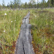 Wooden path walkway — Stock Photo