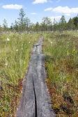 Passagem do caminho de madeira — Foto Stock