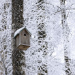 Birdhouse at winter — Stok fotoğraf