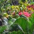 Tropical Garden Paradise - Fiji — Stock Photo