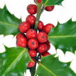 Christmas Holly Leaves & Berries on White Background - Stock Photo