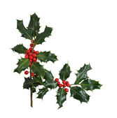 Christmas Holly Border Isolated on White Background — Stock Photo