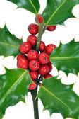 Boże narodzenie holly opuszcza & jagody na białym tle — Zdjęcie stockowe