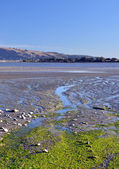 Christchurch Estuary & Bird Sanctuary Vertical Panorama — Stock Photo