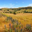 Weka Pass Valley, North Canterbury New Zealand - Lizenzfreies Foto
