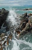 Crashing Waves, Rocks & Kelp — Stock Photo