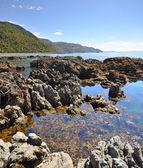 Kaikoura Rock Pool Vertical Panorama, New Zealand — Stock Photo