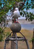Seagul on a Lobster Pot at Kekerengu Beach, New Zealand — Stock Photo