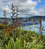 Flax Flowers & Early Pohutukawa in Wellington — Stock Photo