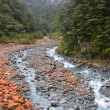 Stock Photo: Arthurs Pass Red Rocks, River & Beech Trees