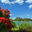 Stock Photo: Pohutukawas in Full Bloom at Kaiteriteri Beach, New Zealand