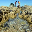 Family on Holiday Explores Rock Pools. — Photo #39136629