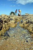 Family on Holiday Explores Rock Pools. — Foto de Stock