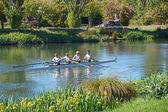 Rowers on the Avon River, Christchurch. — Stock Photo