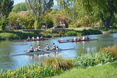 A busy Day for Rowers on the Avon River, Christchurch. — Stock Photo
