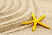 Yellow seastar. — Stock Photo