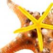 Stock Photo: Seastar on seastar.