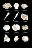 Seashells set. — Stock Photo